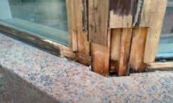 видалення гнилої деревини